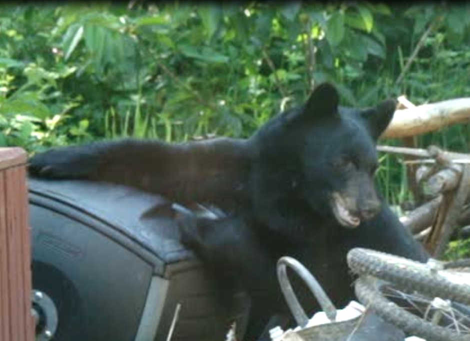 Bear Composter