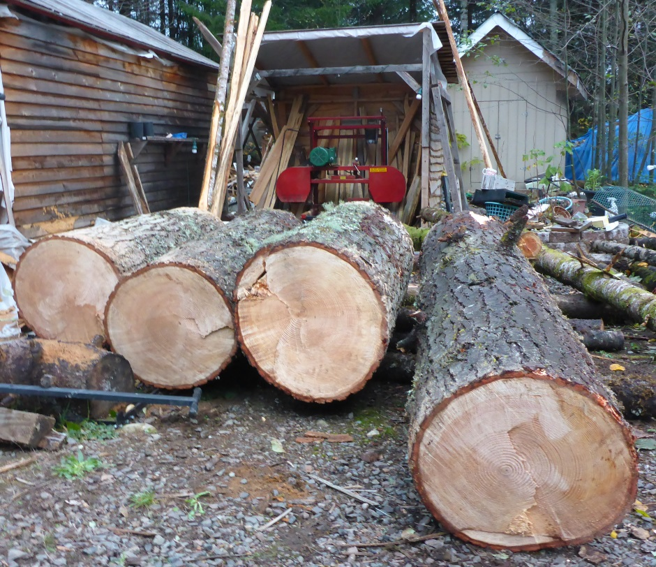 Big Logs Ready For Saw Mill