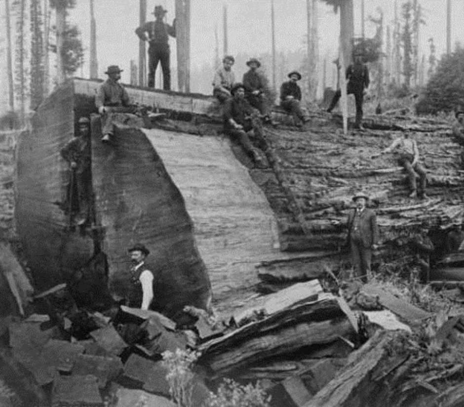 Carnation Big Log At Monroe Logging Company Carnation 1905
