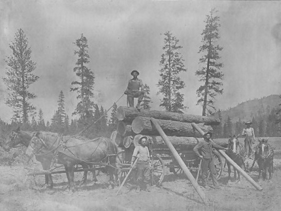 Carnation Horse Logging