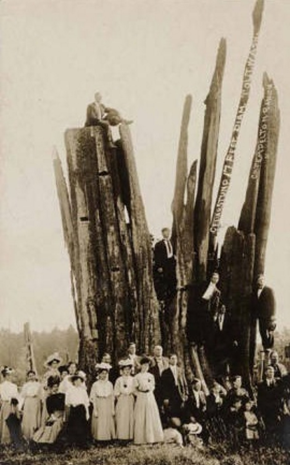 Carnation Huge Cedar Stump Tolt 1905