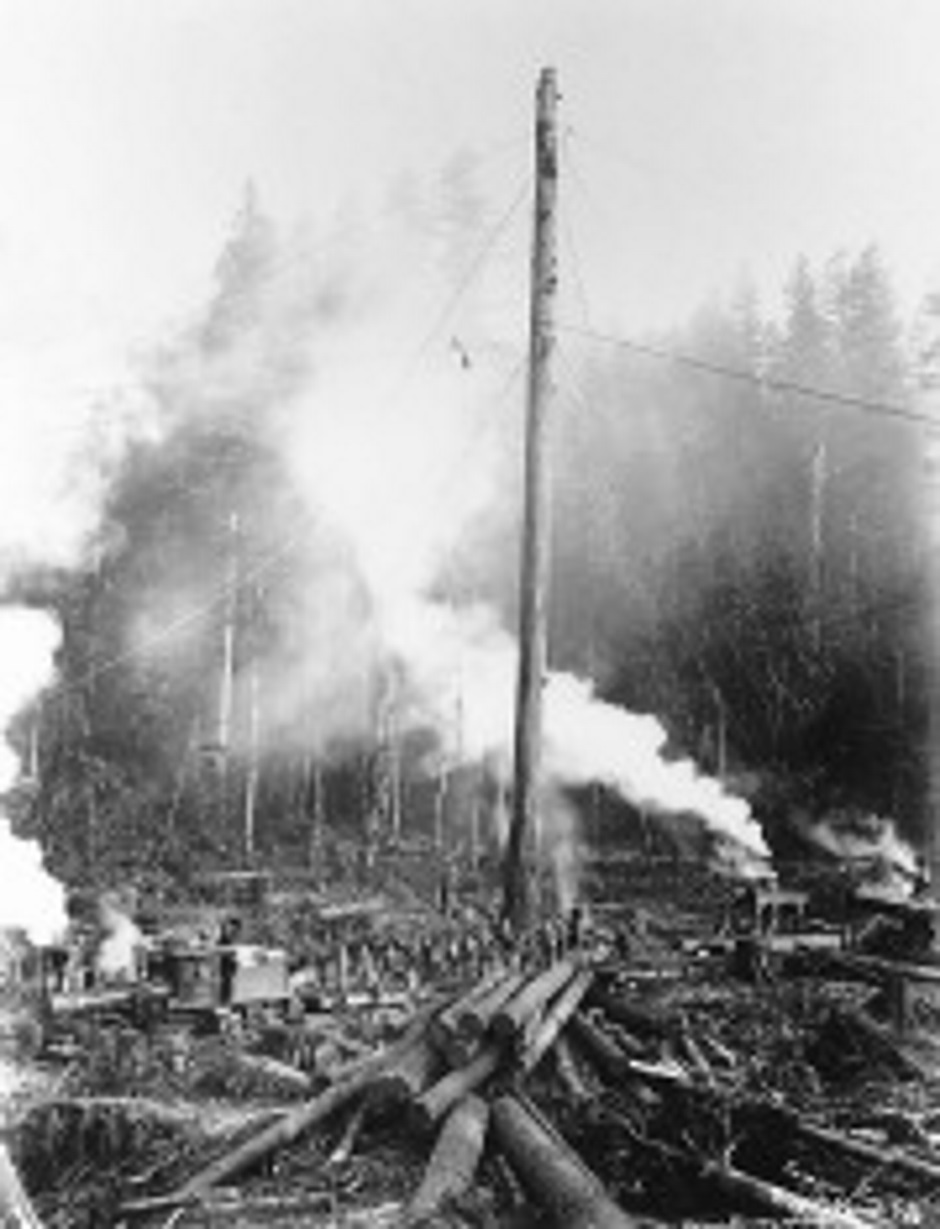 Carnation Logging
