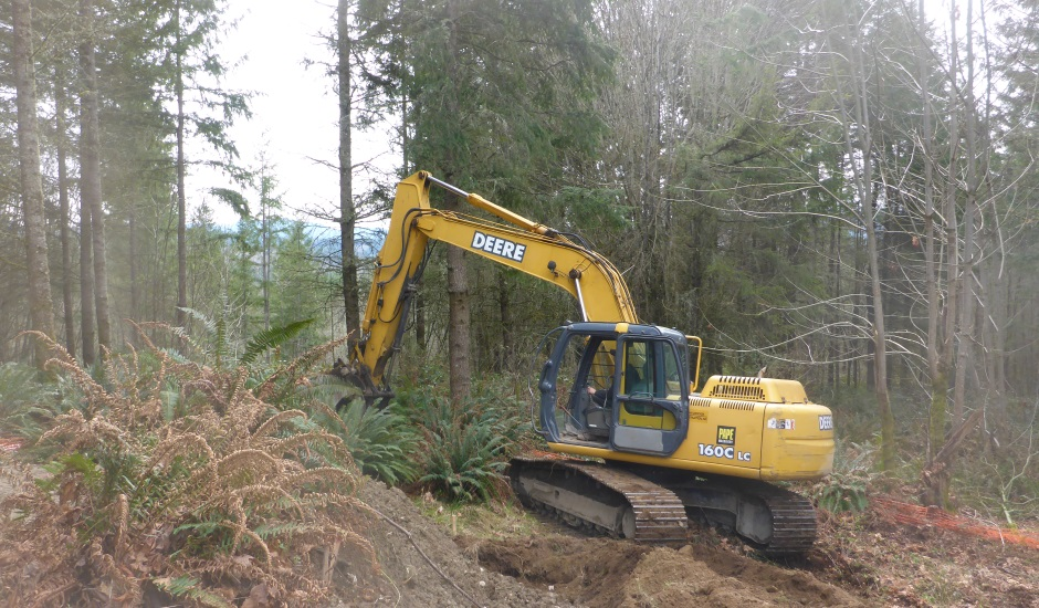 Excavator Moving Ferns